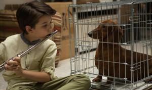 Wiener-Dog-Sundance